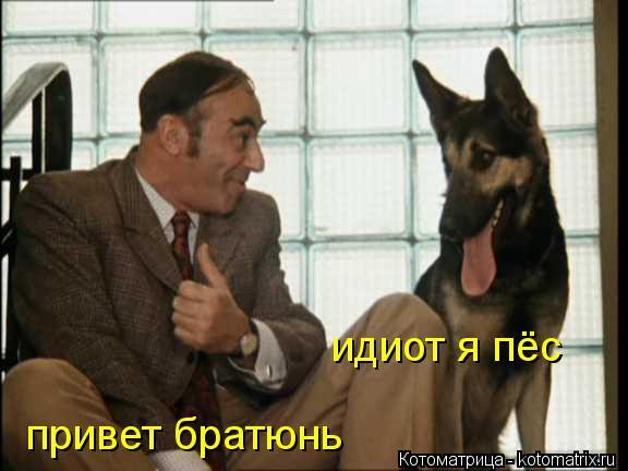 Котоматрица: привет братюнь идиот я пёс