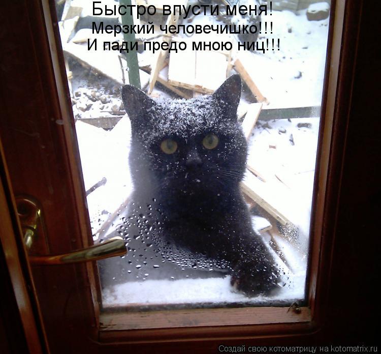 Котоматрица: Быстро впусти меня! Мерзкий человечишко!!! И пади предо мною ниц!!!