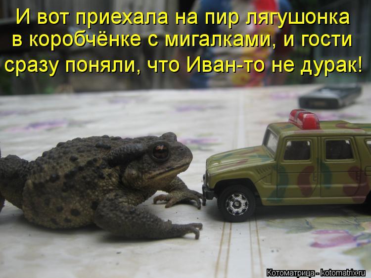 Котоматрица: И вот приехала на пир лягушонка  в коробчёнке с мигалками, и гости  сразу поняли, что Иван-то не дурак!