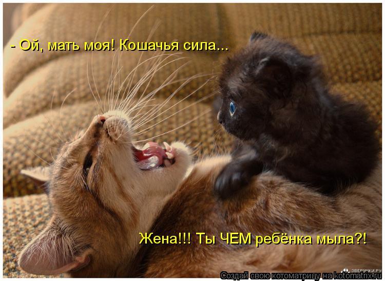 Котоматрица: - Ой, мать моя! Кошачья сила... Жена!!! Ты ЧЕМ ребёнка мыла?!