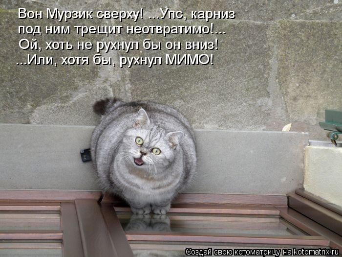 Котоматрица: Вон Мурзик сверху! ...Упс, карниз  под ним трещит неотвратимо!... Ой, хоть не рухнул бы он вниз! ...Или, хотя бы, рухнул МИМО!