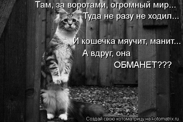 Котоматрица: Там, за воротами, огромный мир... Туда не разу не ходил... И кошечка мяучит, манит... А вдруг, она  ОБМАНЕТ???