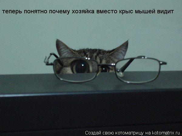 Котоматрица: теперь понятно почему хозяйка вместо крыс мышей видит