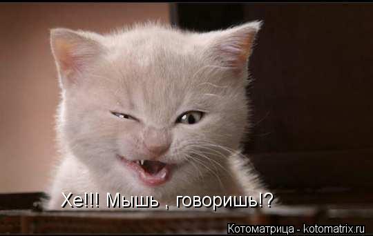 Котоматрица: Хе!!! Мышь , говоришь!?