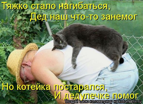 Котоматрица: Тяжко стало нагибаться, Дед наш что-то занемог И дедулечке помог Но котейка постарался,