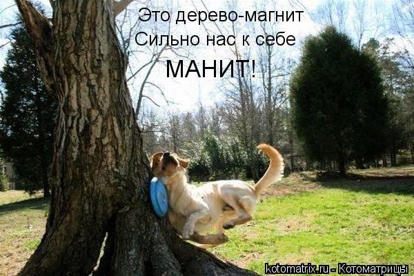 Котоматрица: Это дерево-магнит Сильно нас к себе МАНИТ!