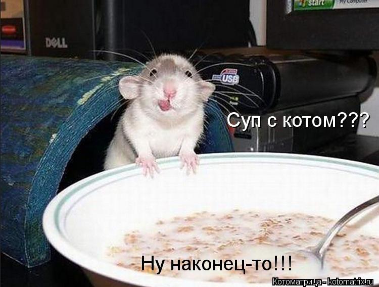 Котоматрица: Суп с котом??? Ну наконец-то!!!