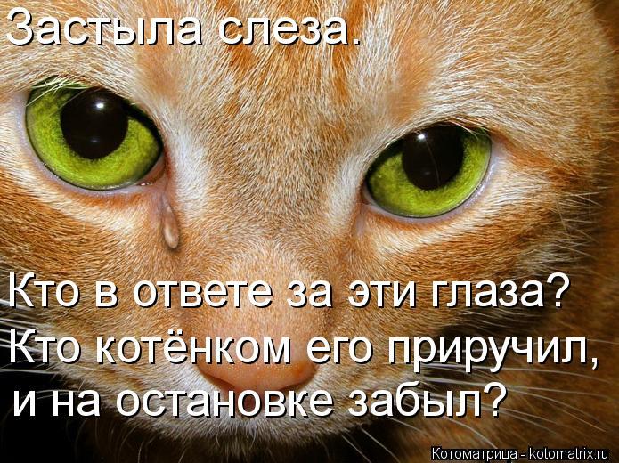 Котоматрица: Застыла слеза. Кто в ответе за эти глаза? Кто котёнком его приручил, и на остановке забыл?