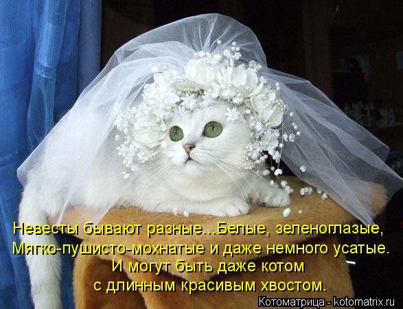 Котоматрица: И могут быть даже котом  с длинным красивым хвостом. Невесты бывают разные...Белые, зеленоглазые, Мягко-пушисто-мохнатые и даже немного усат