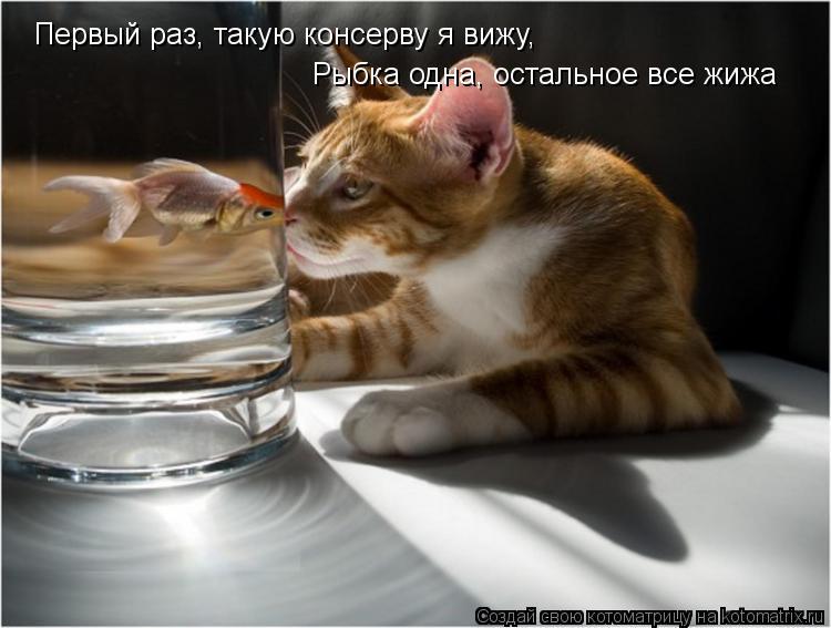 Котоматрица: Первый раз, такую консерву я вижу, Рыбка одна, остальное все жижа