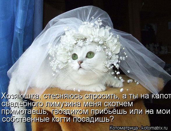 Котоматрица: Хозяюшка, стесняюсь спросить, а ты на капот  свадебного лимузина меня скотчем  примотаешь, гвоздиком прибьёшь или на мои  собственные когти