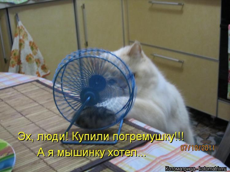 Котоматрица: Эх, люди! Купили погремушку!!! А я мышинку хотел...