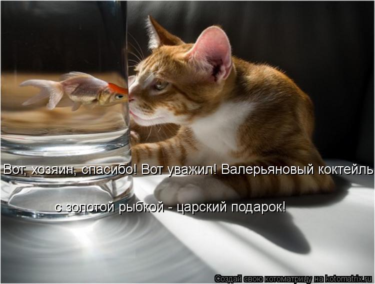 Котоматрица: Вот, хозяин, спасибо! Вот уважил! Валерьяновый коктейль  с золотой рыбкой - царский подарок!