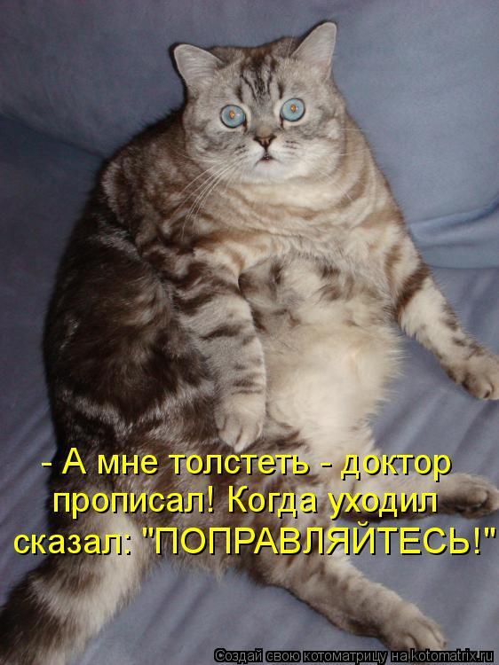 """Котоматрица: - А мне толстеть - доктор прописал! Когда уходил сказал: """"ПОПРАВЛЯЙТЕСЬ!"""""""
