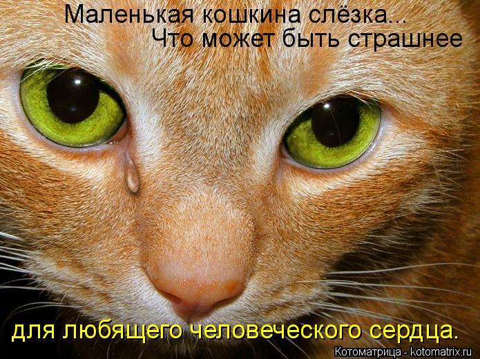 Котоматрица: Маленькая кошкина слёзка... Что может быть страшнее  для любящего человеческого сердца.
