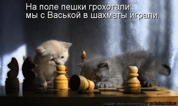 Котоматрица: На поле пешки грохотали: мы с Васькой в шахматы играли.
