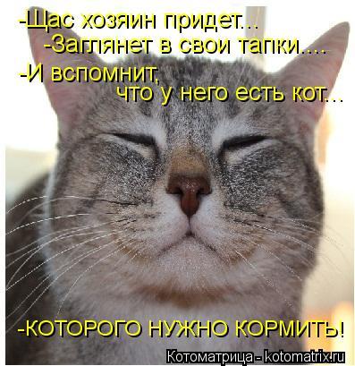 Котоматрица: -Щас хозяин придет... -Заглянет в свои тапки.... -И вспомнит, что у него есть кот... -КОТОРОГО НУЖНО КОРМИТЬ!