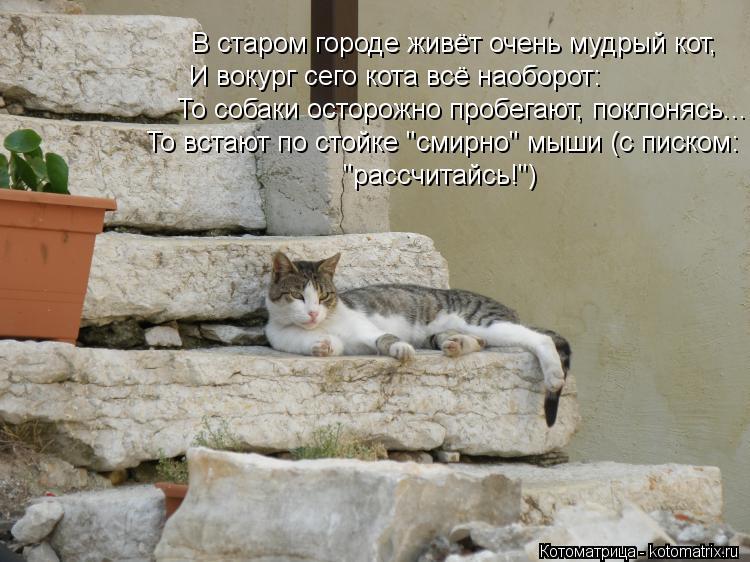 """Котоматрица: И вокург сего кота всё наоборот: То собаки осторожно пробегают, поклонясь... """"рассчитайсь!"""") То встают по стойке """"смирно"""" мыши (с писком: В стар"""
