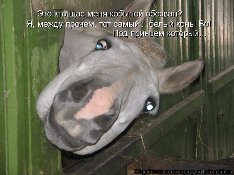 Котоматрица: Это кто щас меня кобылой обозвал? Я, между прочем, тот самый... белый конь! Под принцем который... Во!