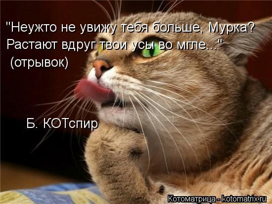 """Котоматрица: Б. КОТспир """"Неужто не увижу тебя больше, Мурка? Растают вдруг твои усы во мгле..."""" (отрывок)"""