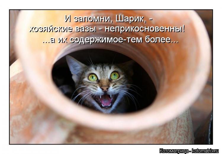 Котоматрица: И запомни, Шарик, -  хозяйские вазы - неприкосновенны! ...а их содержимое-тем более...