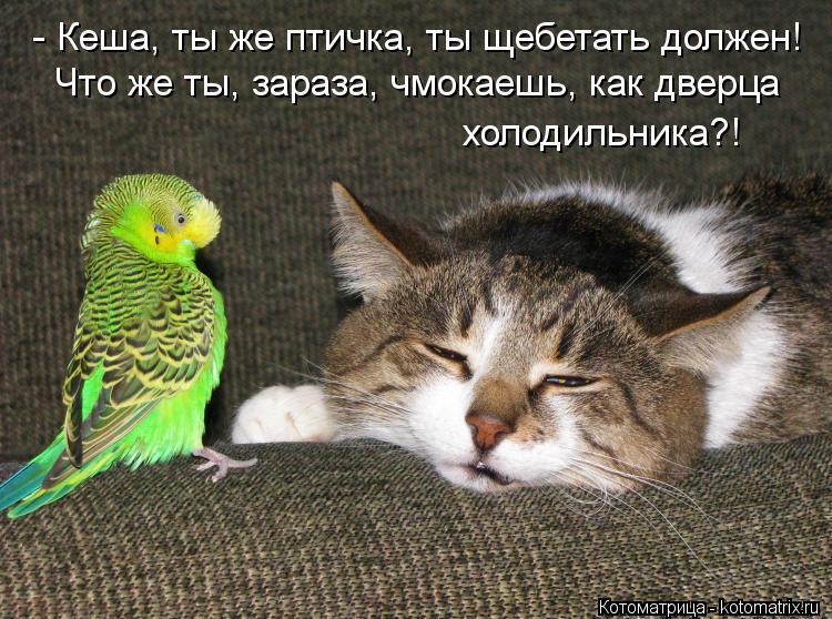 Котоматрица: - Кеша, ты же птичка, ты щебетать должен! Что же ты, зараза, чмокаешь, как дверца холодильника?!