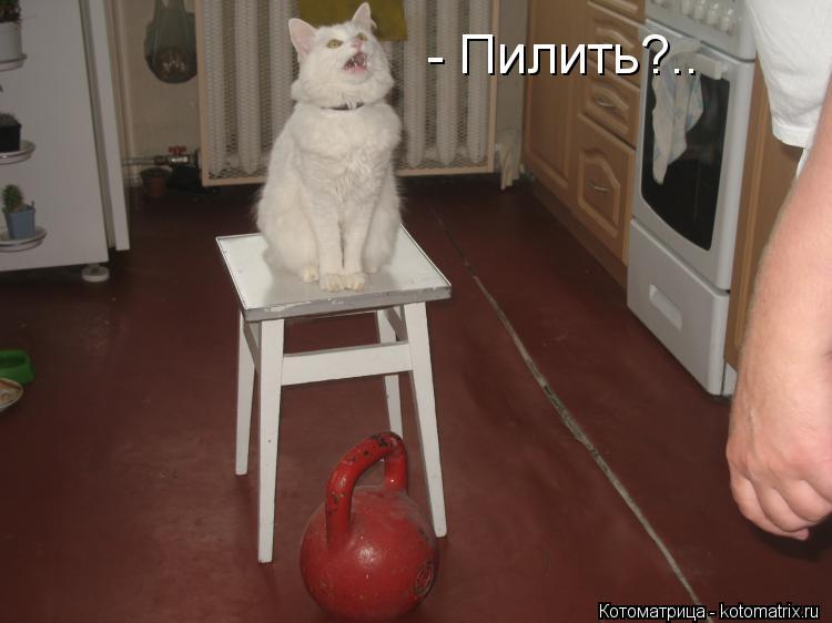 Котоматрица: - Пилить?..