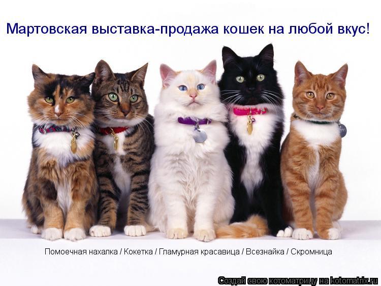 Котоматрица: Мартовская выставка-продажа кошек на любой вкус! Помоечная нахалка / Кокетка / Гламурная красавица / Всезнайка / Скромница