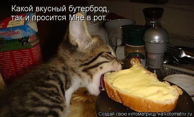 Котоматрица: Какой вкусный бутерброд, так и просится Мне в рот...