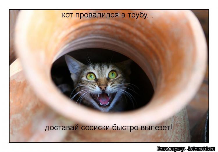 Котоматрица: кот провалился в трубу... доставай сосиски,быстро вылезет!