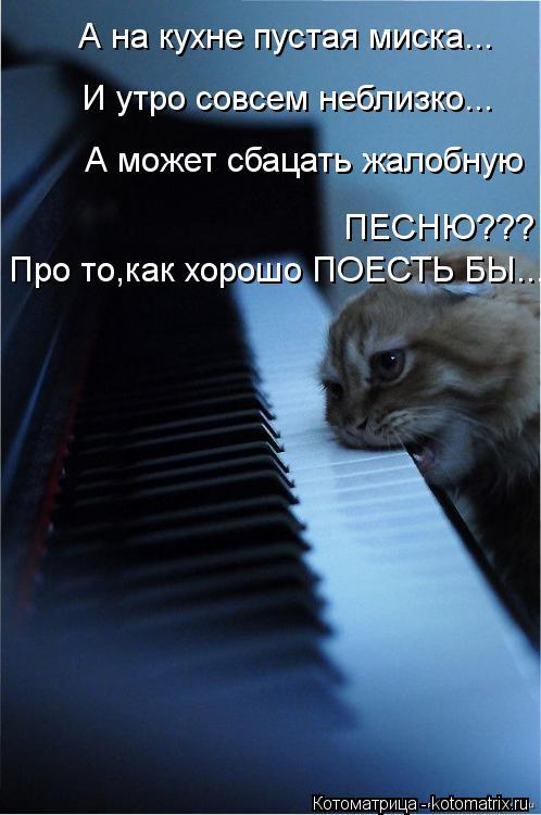 Котоматрица: А на кухне пустая миска... И утро совсем неблизко... А может сбацать жалобную Про то,как хорошо ПОЕСТЬ БЫ... ПЕСНЮ???