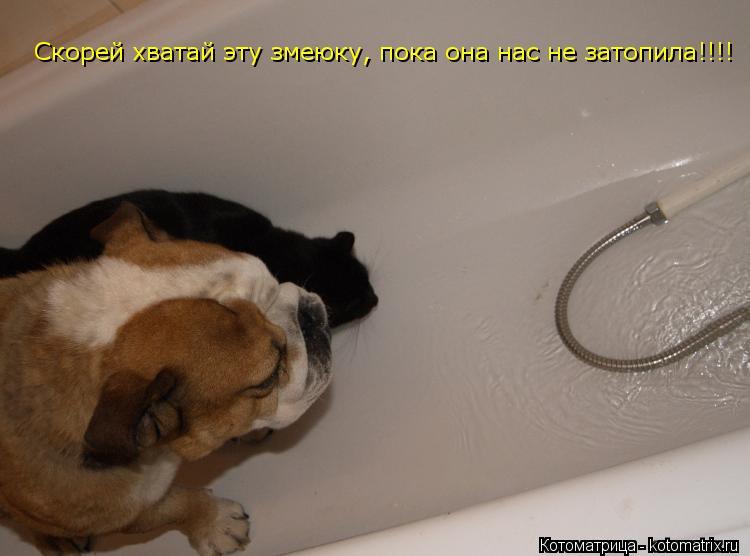 Котоматрица: Скорей хватай эту змеюку, пока она нас не затопила!!!!