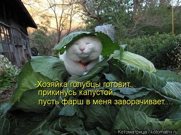 Котоматрица: -Хозяйка голубцы готовит... прикинусь капустой, пусть фарш в меня заворачивает....