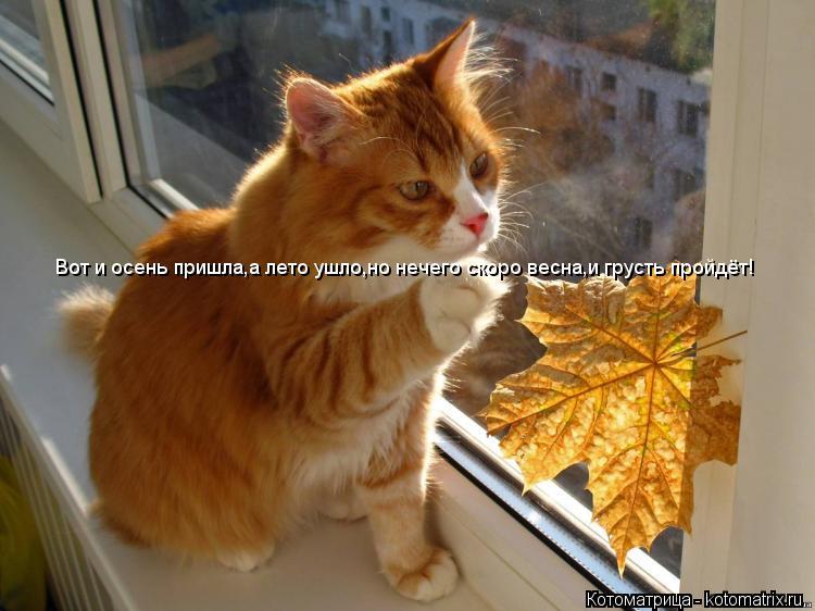 Котоматрица: Вот и осень пришла,а лето ушло,но нечего скоро весна,и грусть пройдёт!