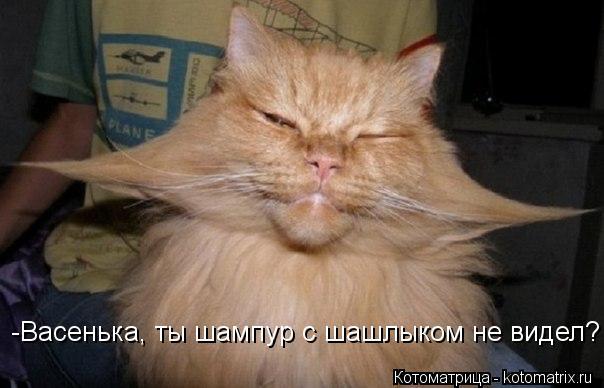 Котоматрица: -Васенька, ты шампур с шашлыком не видел?