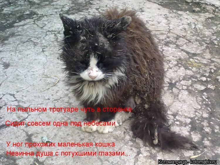 Котоматрица: На пыльном тротуаре чуть в сторонке Сидит совсем одна под небесами У ног прохожих маленькая кошка Невинна душа с потухшими глазами... У ног