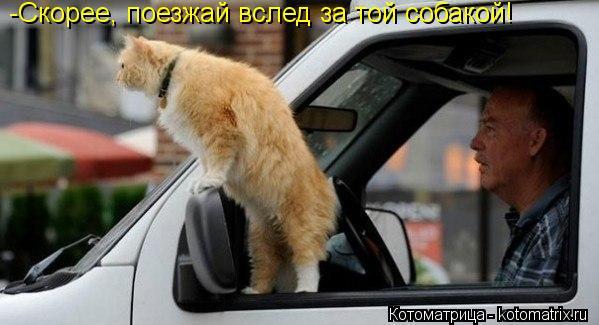 Котоматрица: -Скорее, поезжай вслед за той собакой!