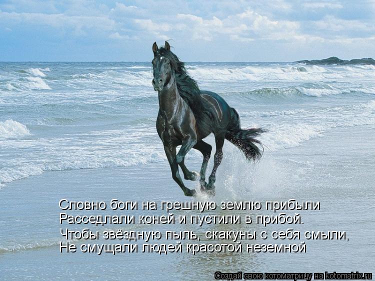 Котоматрица: Расседлали коней и пустили в прибой. Словно боги на грешную землю прибыли Не смущали людей красотой неземной Чтобы звёздную пыль, скакуны с