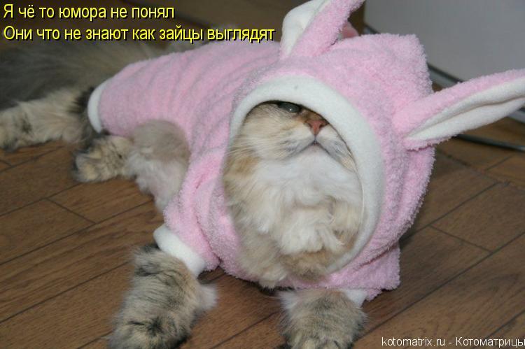 Котоматрица: Я чё то юмора не понял Они что не знают как зайцы выглядят