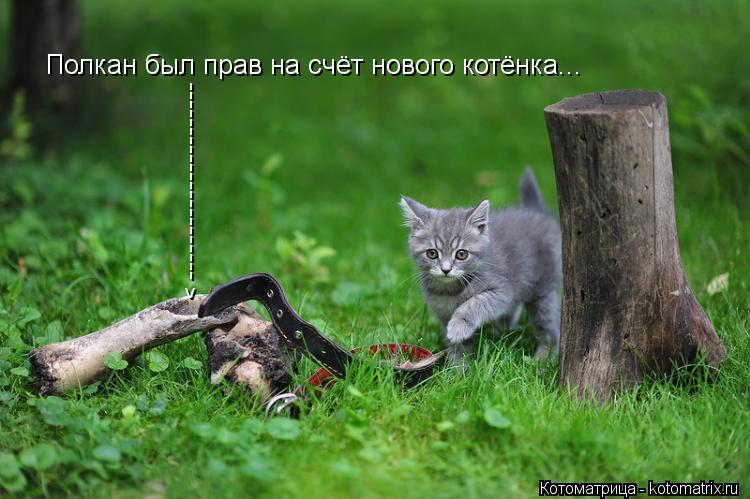 Котоматрица: Полкан был прав на счёт нового котёнка... ---------------------- ^