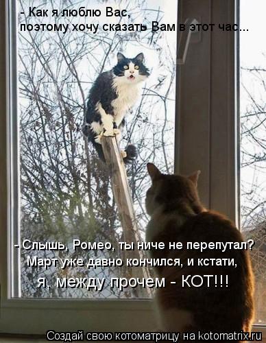 Котоматрица: - Как я люблю Вас, - Слышь, Ромео, ты ниче не перепутал? поэтому хочу сказать Вам в этот час... Март уже давно кончился, и кстати, я, между прочем -
