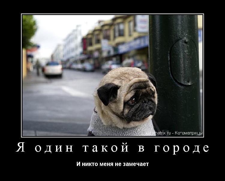 Котоматрица: Я один такой в городе И никто меня не замечает