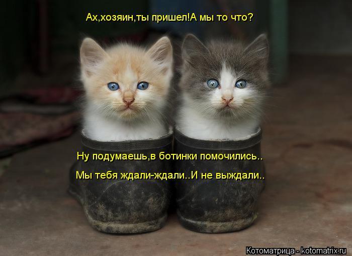 Котоматрица: Ах,хозяин,ты пришел!А мы то что? Ну подумаешь,в ботинки помочились.. Мы тебя ждали-ждали..И не выждали..