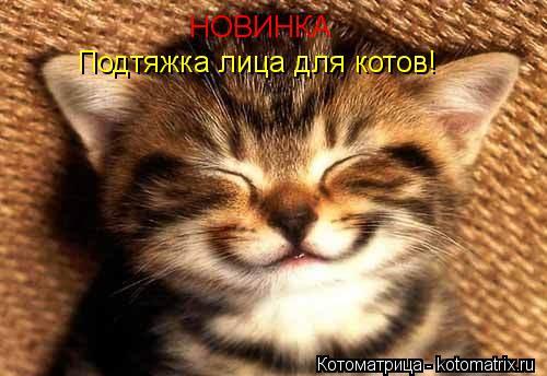 Котоматрица: НОВИНКА Подтяжка лица для котов!