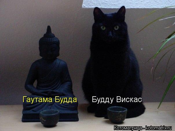 Котоматрица: Будду Вискас Гаутама Будда