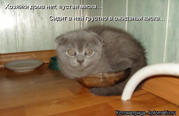 Котоматрица: Хозяйки дома нет, пустая миска... Сидит в ней грустно в ожиданьи киска... Хозяйки дома нет, пустая миска...  Сидит в ней грустно в ожиданьи киска