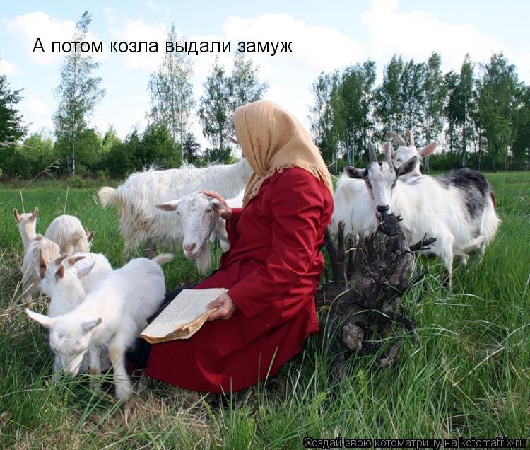 Котоматрица: А потом козла выдали замуж