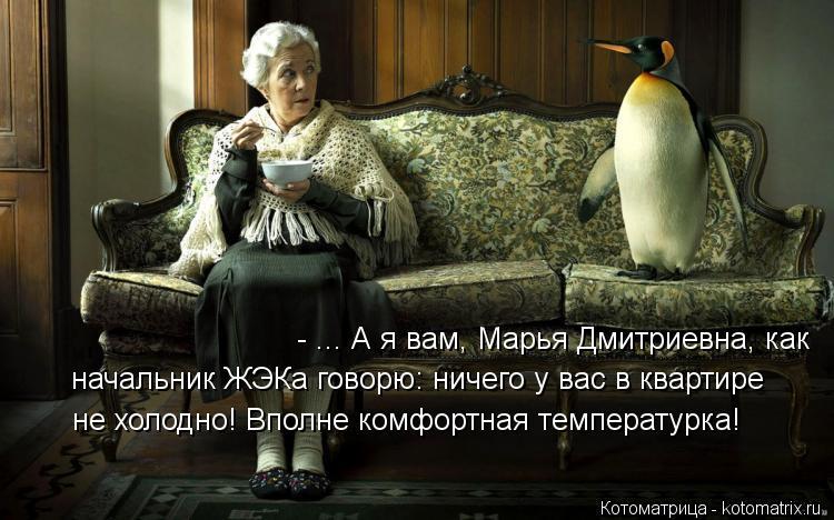 Котоматрица: - ... А я вам, Марья Дмитриевна, как  начальник ЖЭКа говорю: ничего у вас в квартире  не холодно! Вполне комфортная температурка!