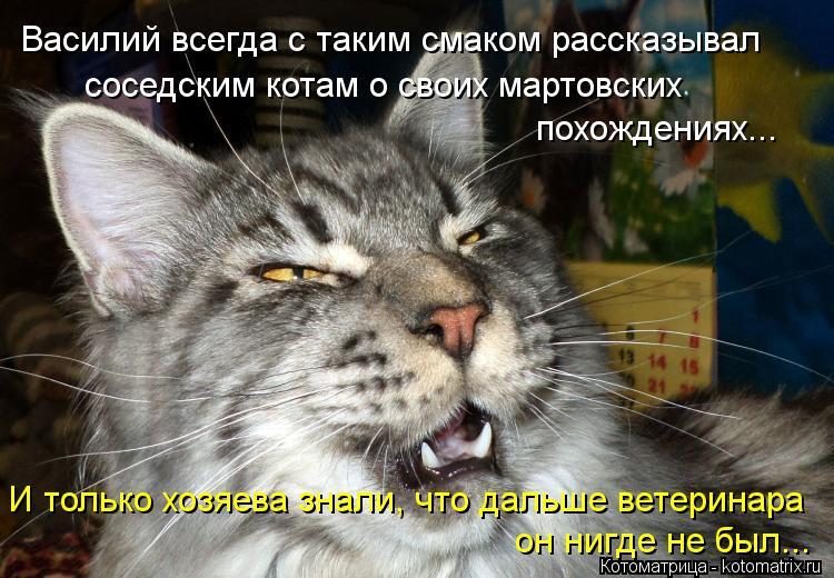 Котоматрица: Василий всегда с таким смаком рассказывал соседским котам о своих мартовских похождениях... И только хозяева знали, что дальше ветеринара о