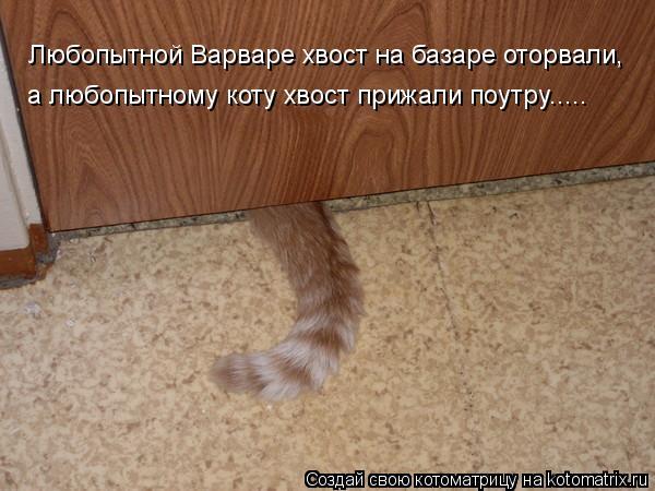 Котоматрица: Любопытной Варваре хвост на базаре оторвали, а любопытному коту хвост прижали поутру.....